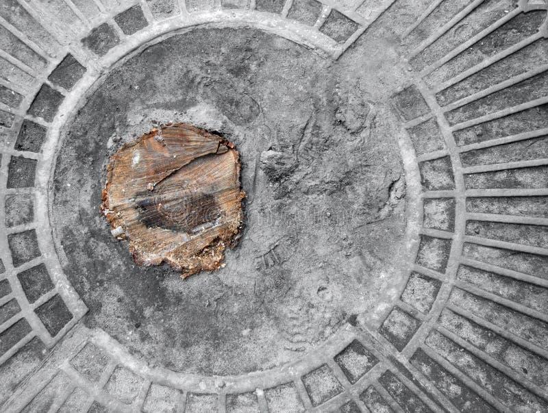 Moignon d'arbre image stock