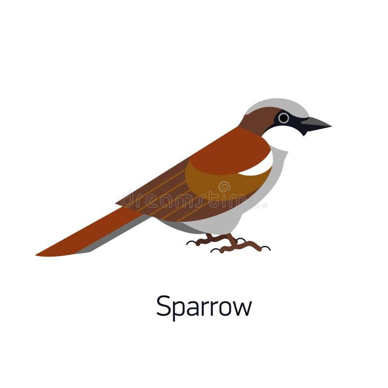 Moineau d'isolement sur le fond blanc Petit oiseau passerine mignon de synanthrope Birdie drôle Animal urbain adorable, aviaire illustration stock