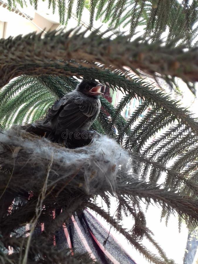 Moineau d'oiseau de chant photos stock