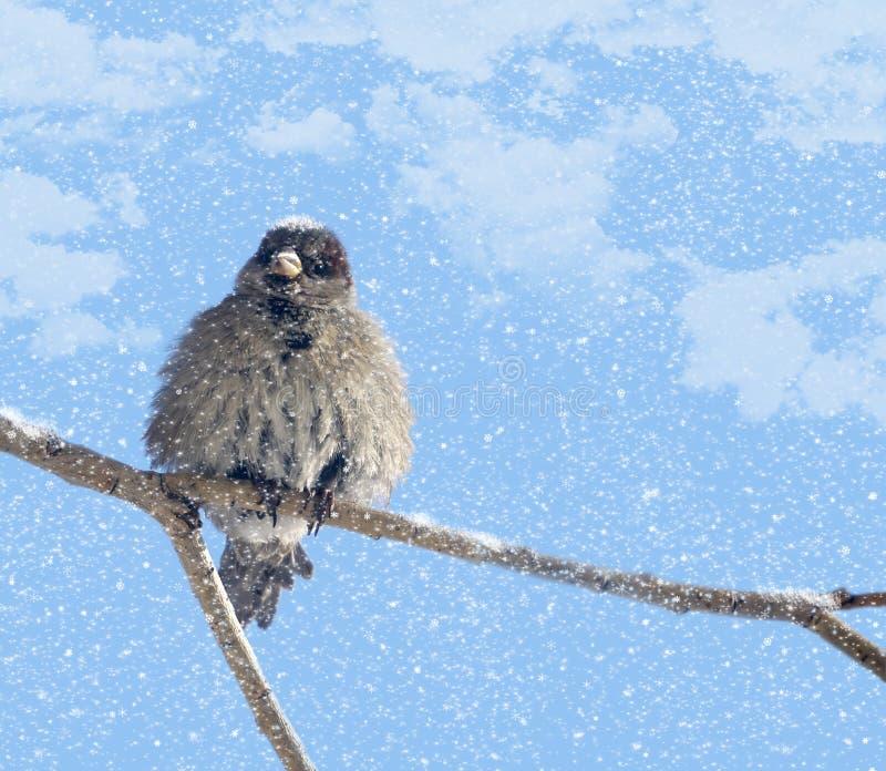 Moineau en désordre et neige illustration de vecteur