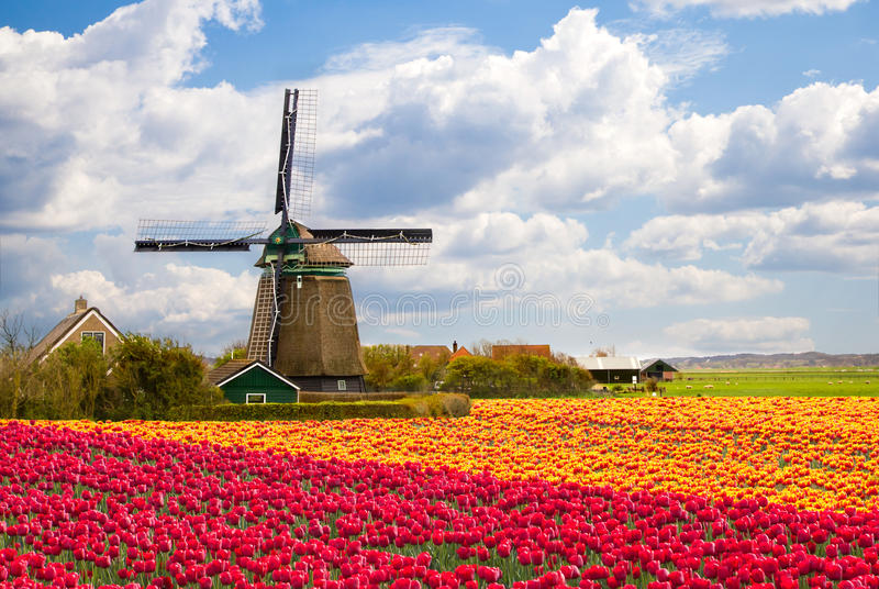 Moinho de vento com campo do tulip fotos de stock royalty free