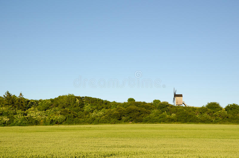 Moinho de vento de madeira velho por um campo de milho verde do trigo fotografia de stock royalty free