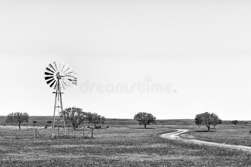 Moinho de vento e estrada nos wildflowers perto de Nieuwoudtville monocromático fotografia de stock