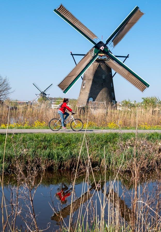 Moinho de vento hist?rico com o ciclista no primeiro plano, em Kinderdijk, Holanda imagem de stock