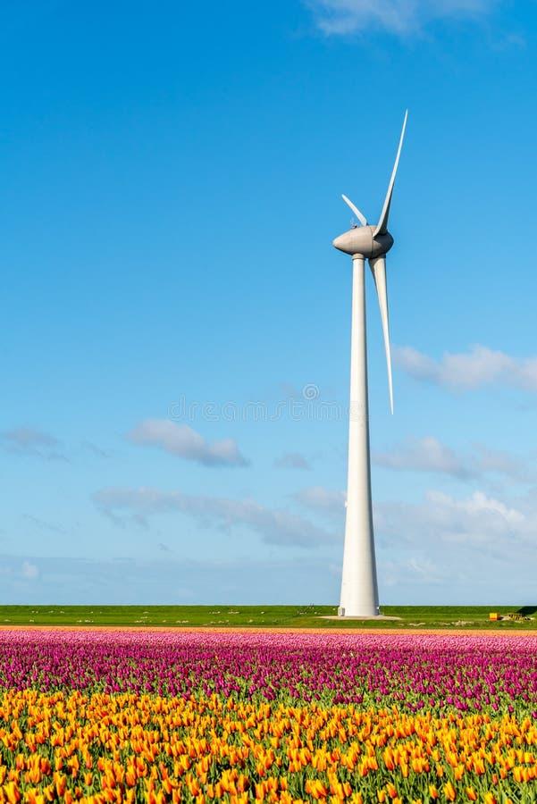 Moinho de vento no campo da tulipa foto de stock royalty free