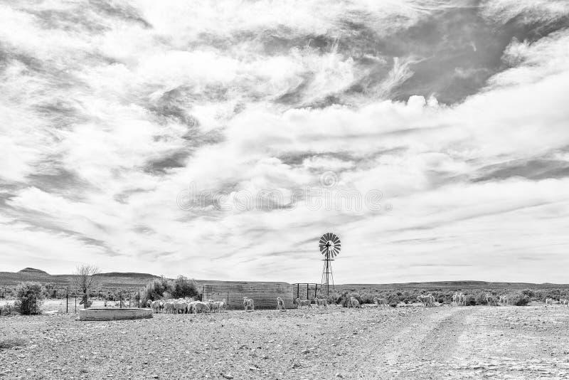 Moinho de vento, represa e carneiros perto de Middelpos monocromático fotos de stock royalty free