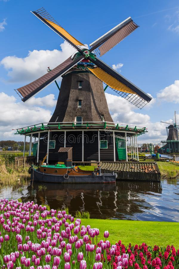 Moinhos de vento e flores em Países Baixos imagens de stock royalty free