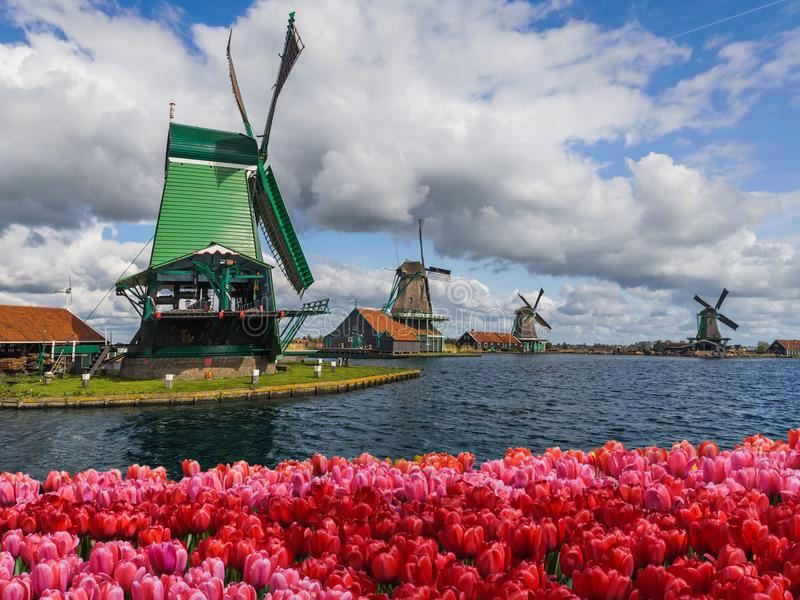 Moinhos de vento e flores em Países Baixos fotos de stock royalty free