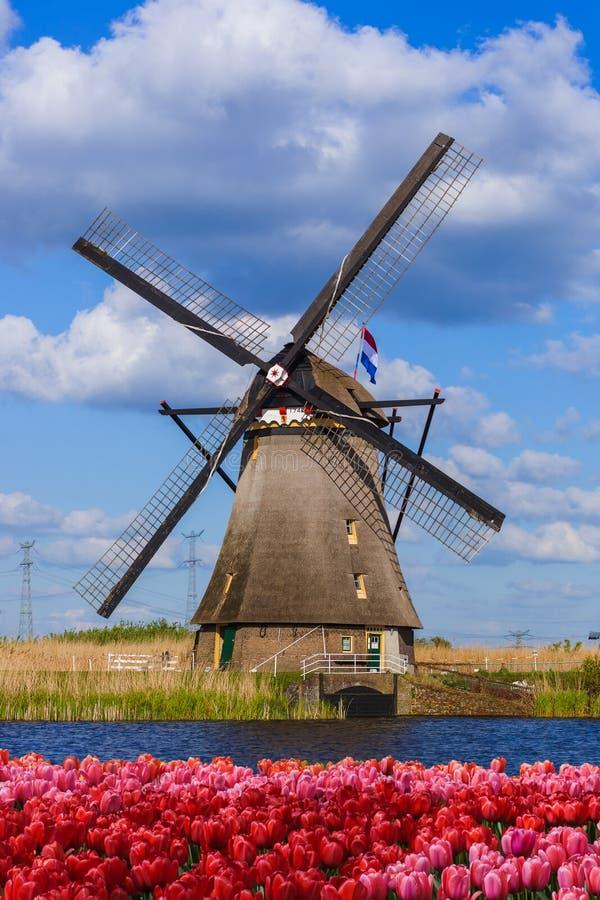 Moinhos de vento e flores em Países Baixos foto de stock royalty free
