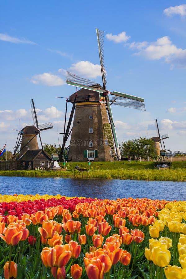 Moinhos de vento e flores em Países Baixos fotografia de stock royalty free