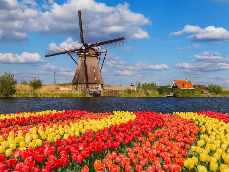 Moinhos de vento e flores em Países Baixos imagem de stock