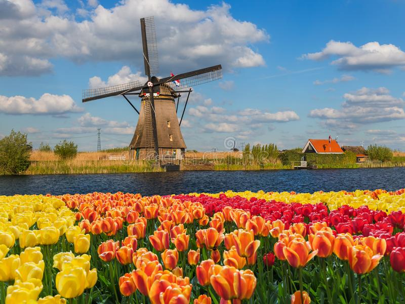 Moinhos de vento e flores em Pa?ses Baixos imagens de stock