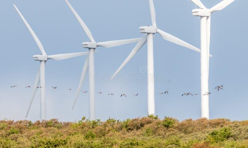 Moinhos de vento em seguido com voo dos pássaros fotografia de stock
