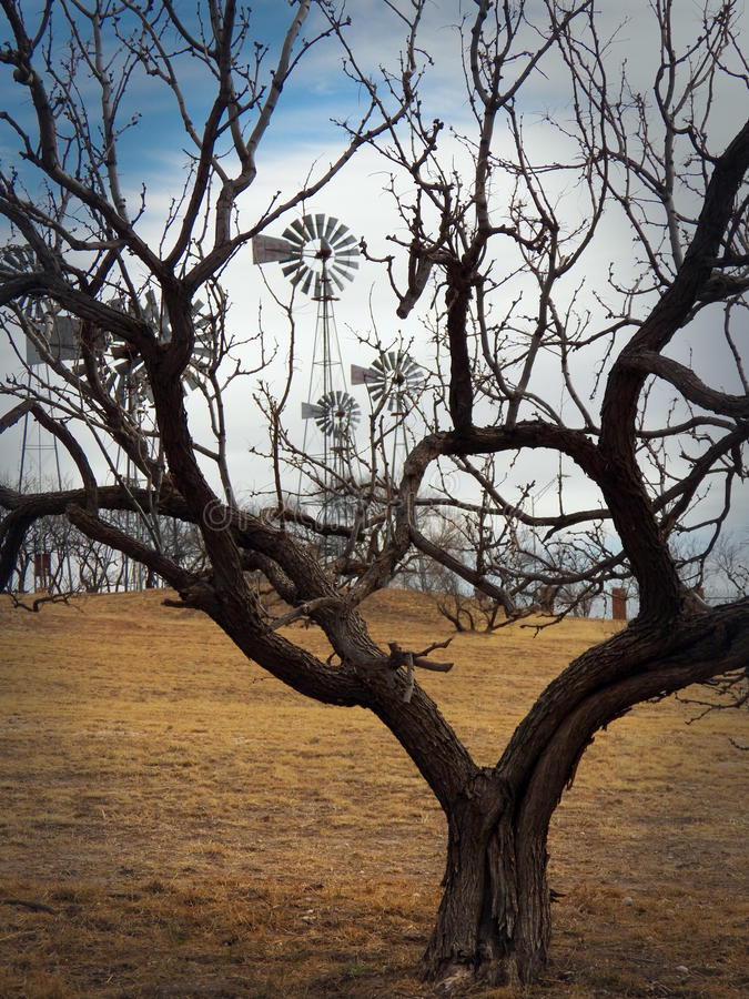 Moinhos de vento quadro por ramos de árvore foto de stock royalty free