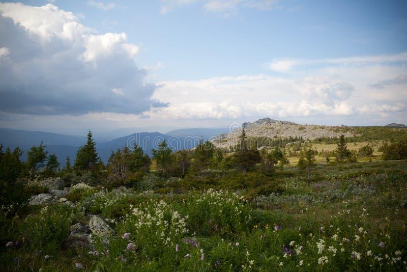 Mointain skog i Ryssland royaltyfri foto