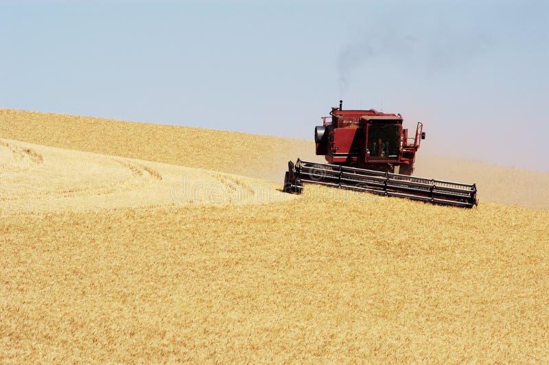 Moisson 21 de blé photographie stock libre de droits