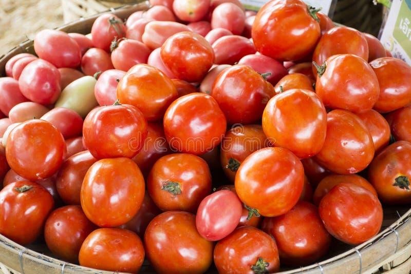 Moisson beaucoup légume du cru de tomate fraîche en démonstration et vente images libres de droits