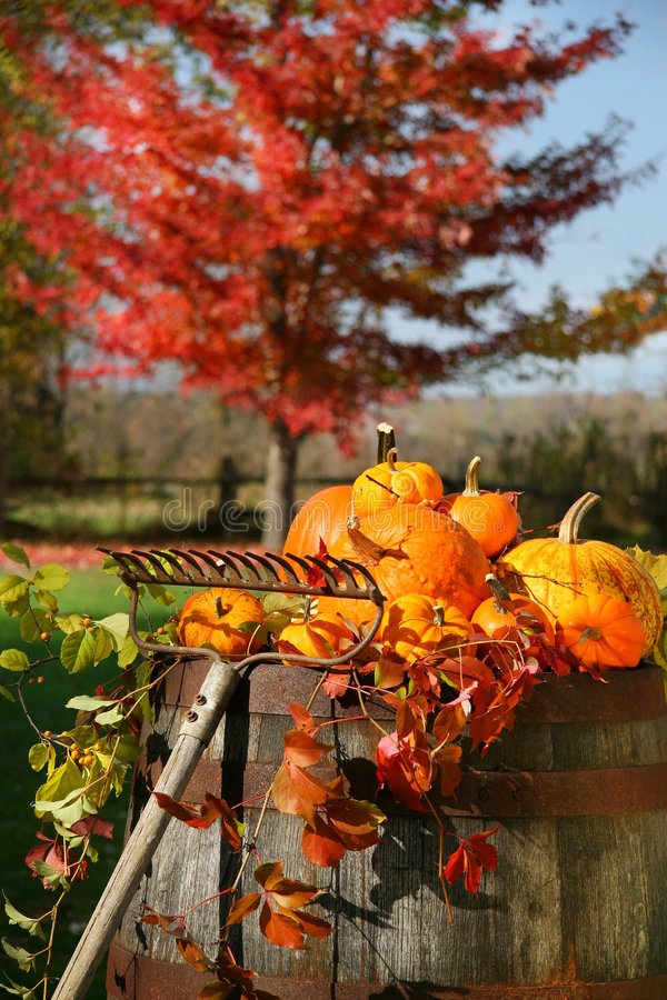 Moisson colorée d'automnes images stock