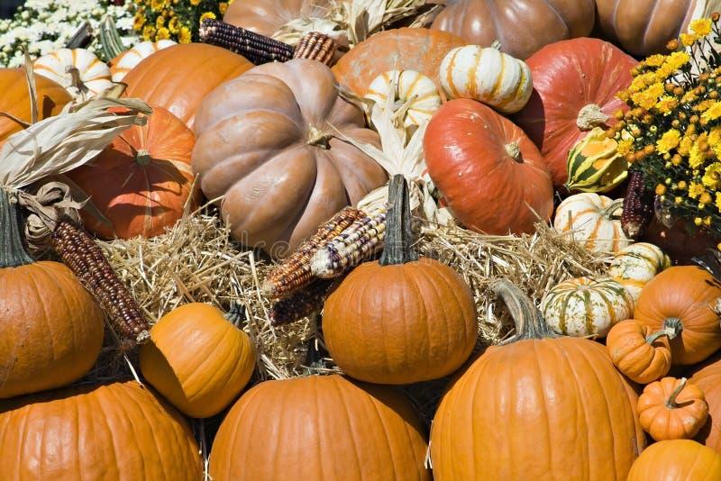 Moisson d'automne photo stock