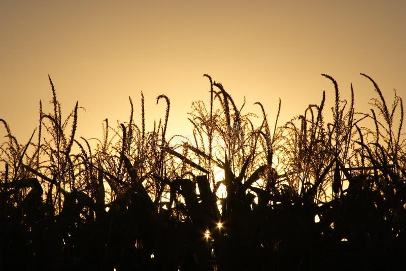 Moisson d'automne au coucher du soleil image stock