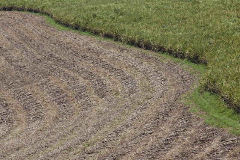 Moisson de zone de collecte de canne à sucre photos libres de droits