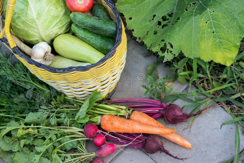 Moisson des légumes frais images stock