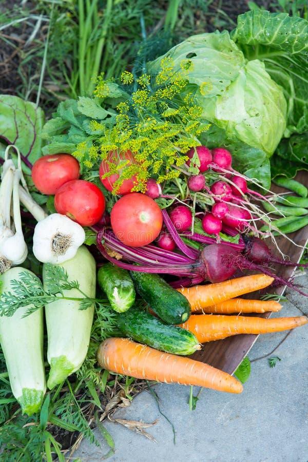 Moisson des légumes frais photos libres de droits