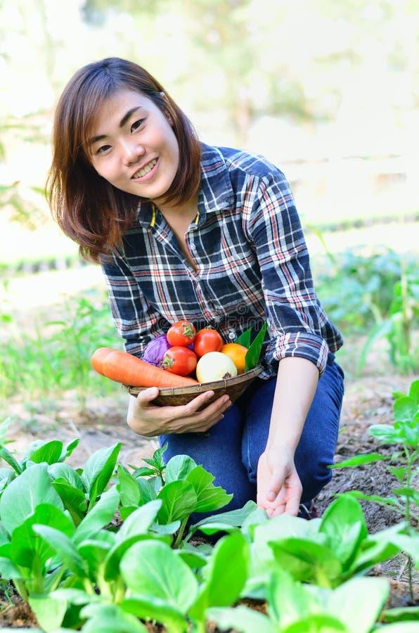 Moisson des légumes organiques images libres de droits
