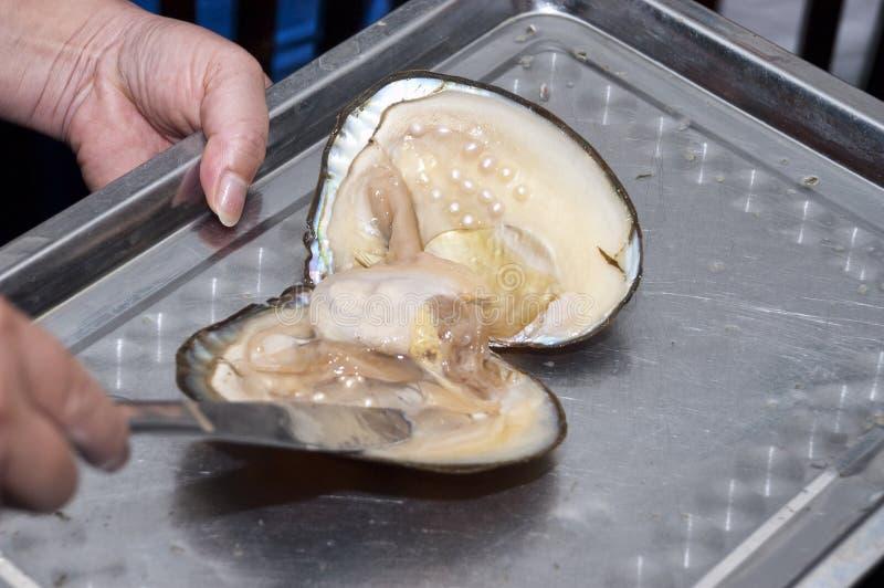 Moisson des perles d'eau doux d'une moule image stock