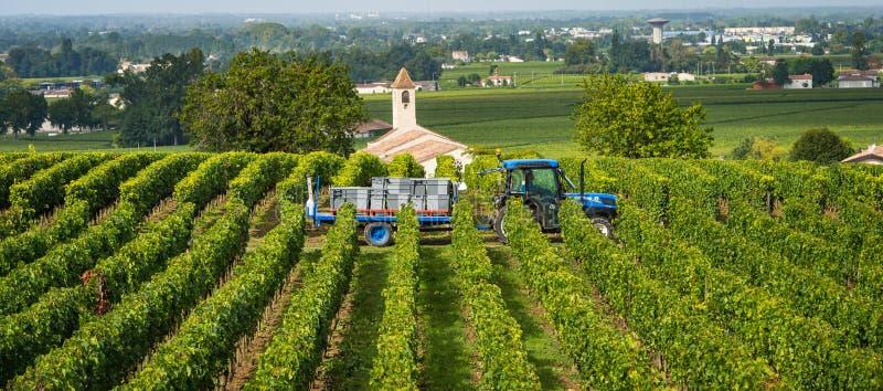 Moisson des raisins rouges dans les vignobles de Saint Emilion, Bordeaux image stock