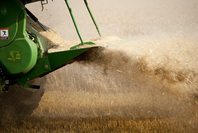 Moisson du blé image libre de droits