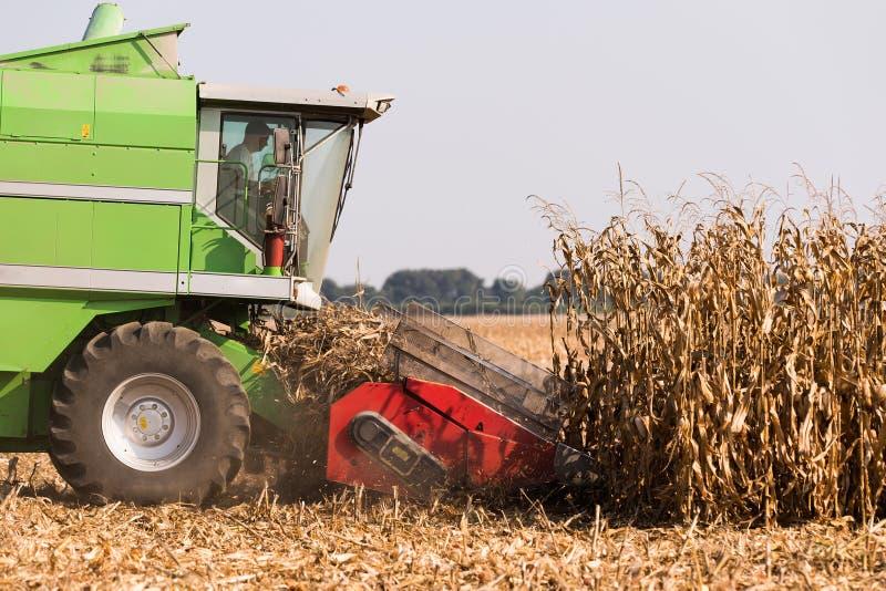Moisson du champ de maïs avec le cartel images stock