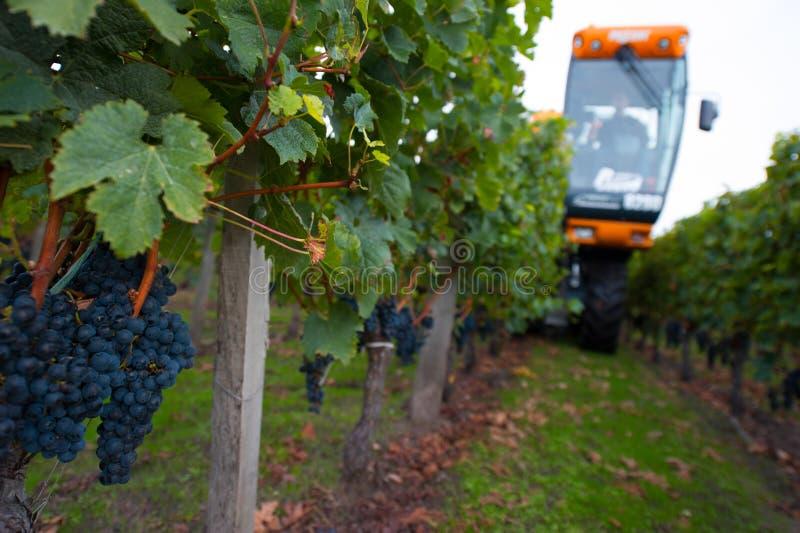 Moisson mécanique des raisins dans le vignoble photo stock