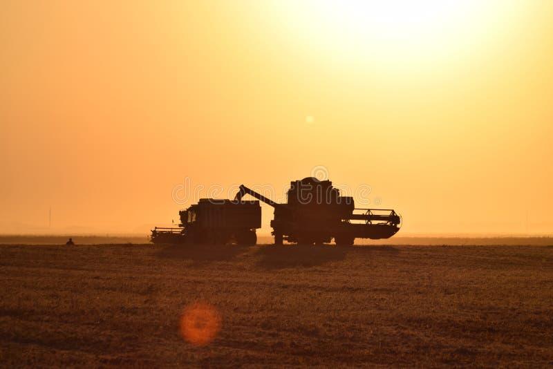 Moisson par des cartels au coucher du soleil images libres de droits