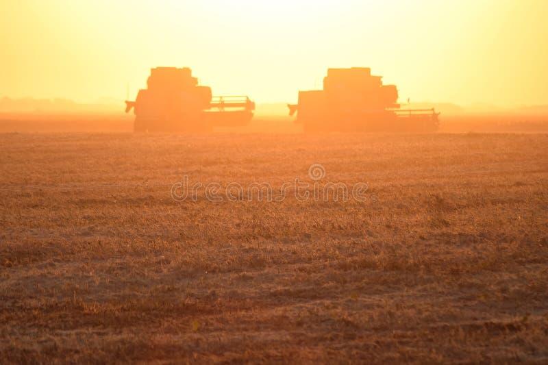 Moisson par des cartels au coucher du soleil photos libres de droits