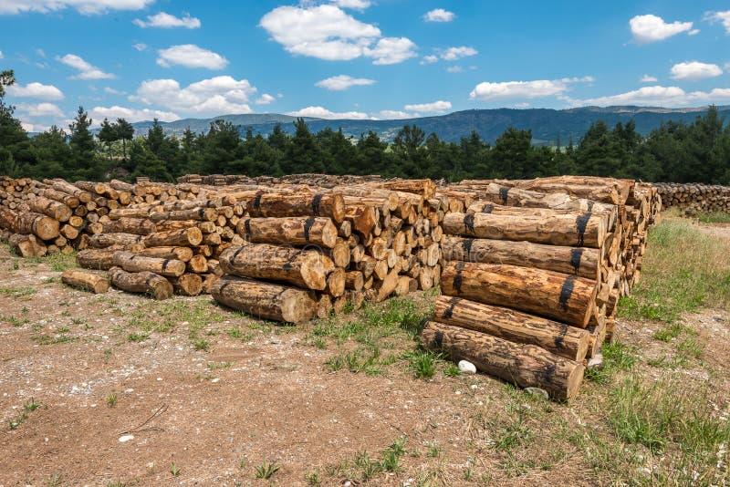 Moissonnant le bois de construction ouvre une session une forêt photo libre de droits