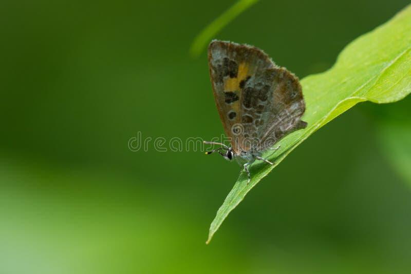 Download Moissonneuse photo stock. Image du insecte, couleur, lame - 45360812