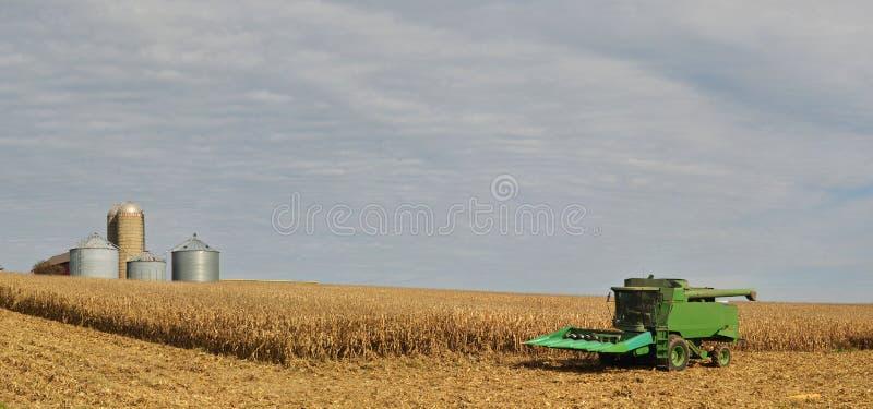 Moissonneuse dans le domaine de maïs avec des poubelles de grain photo libre de droits