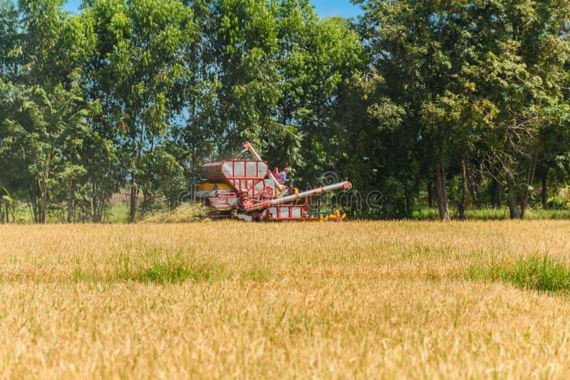 Moissonneuse de cartel dans l'action sur le gisement de riz La moisson est le processus de recueillir une culture mûre des champs photo libre de droits