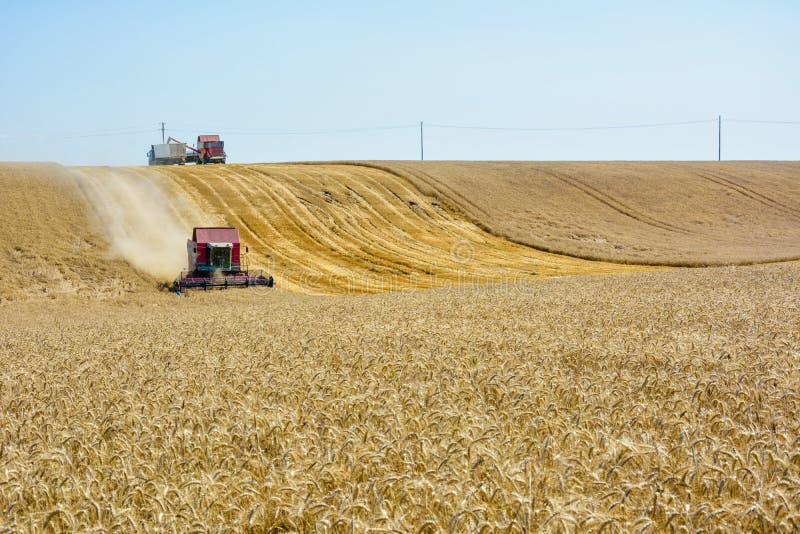 Moissonneuse de cartel dans le domaine de blé photographie stock