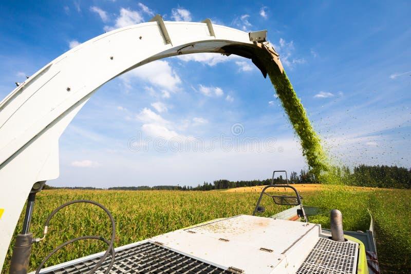 Moissonneuse de cartel moderne déchargeant le maïs vert image libre de droits