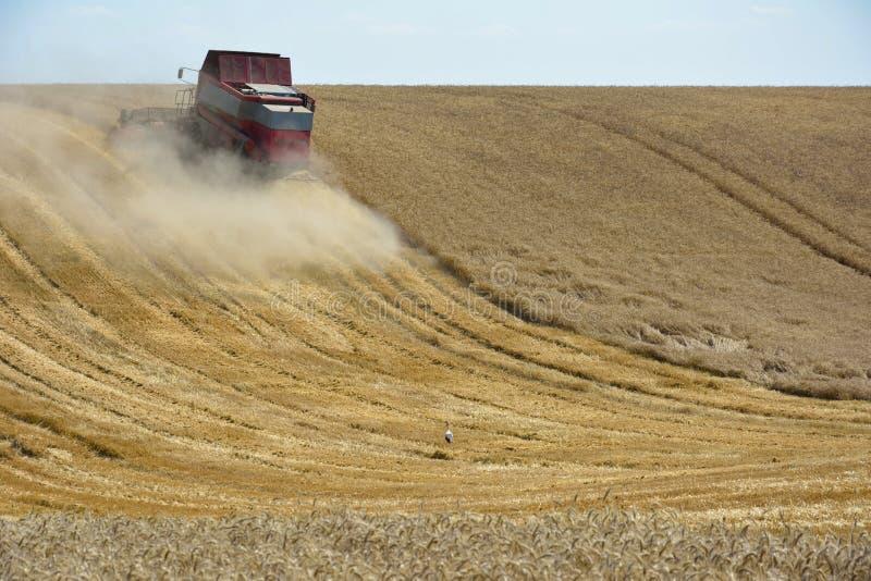 Moissonneuse de cartel moissonnant le champ de blé photographie stock libre de droits