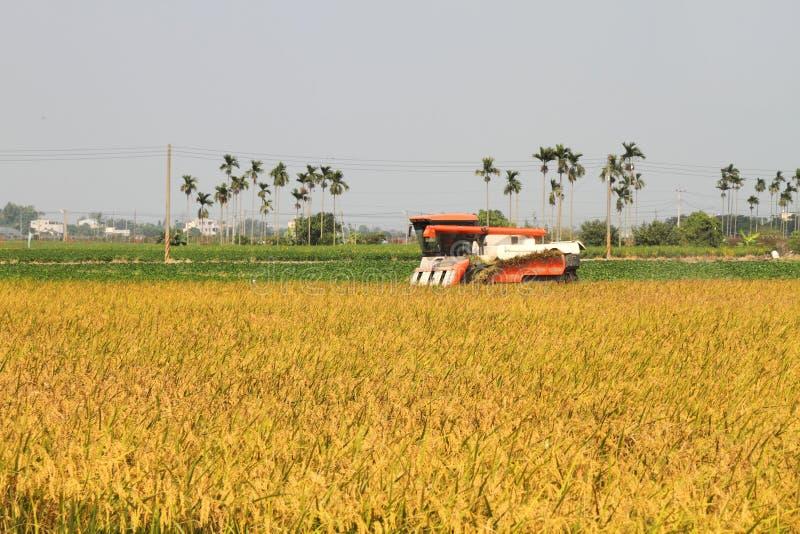 Moissonneuse de riz images libres de droits