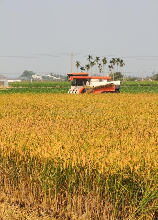 Moissonneuse de riz photo libre de droits