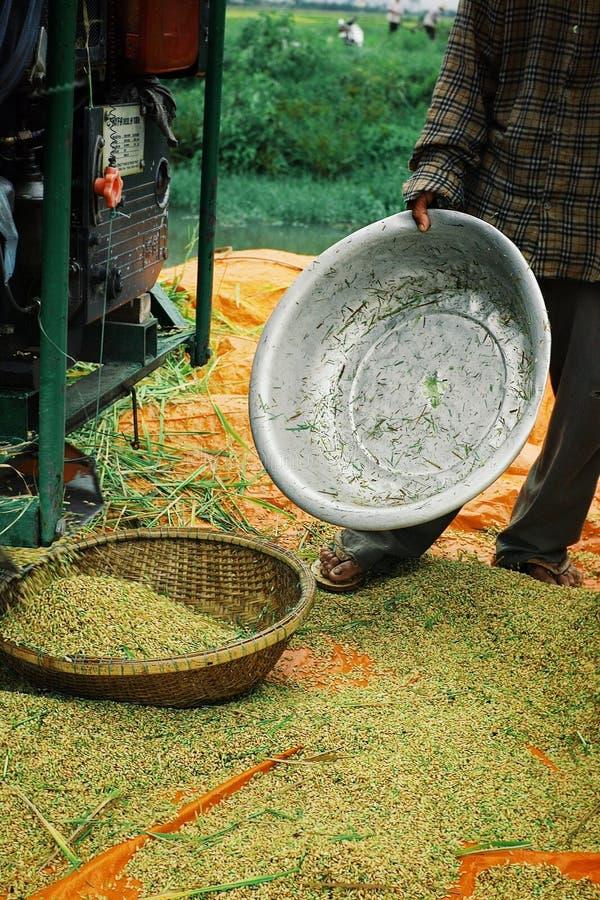 Moissonneuse de riz rassemblant les grains à côté d'un canal photo libre de droits