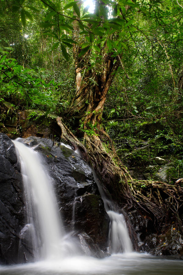 In moist forests royalty free stock photography