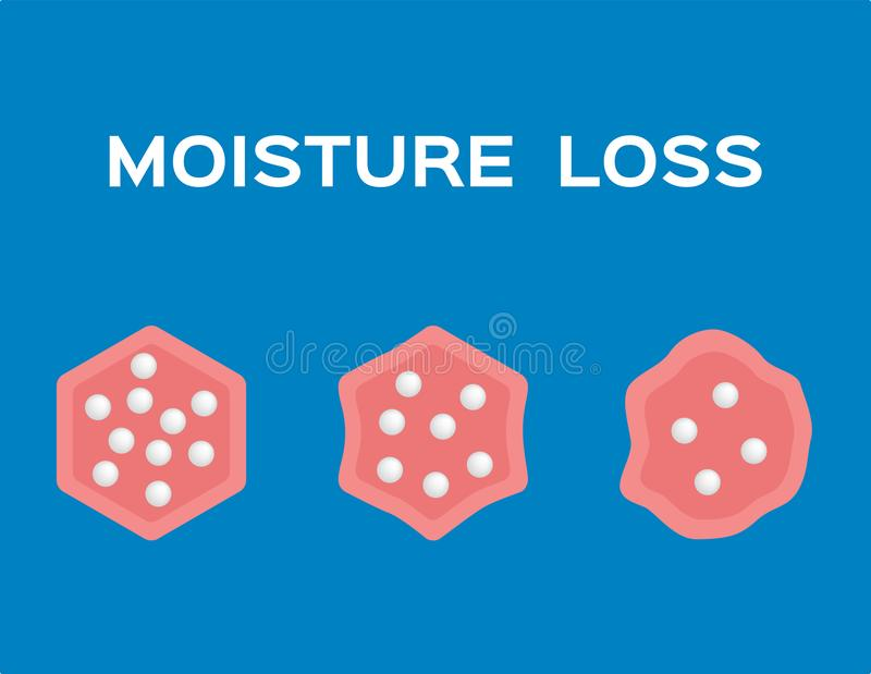 Moisture loss in cell vector royalty free illustration