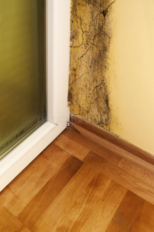 Download Moisture and mold stock image. Image of landlord, healthy - 26937203