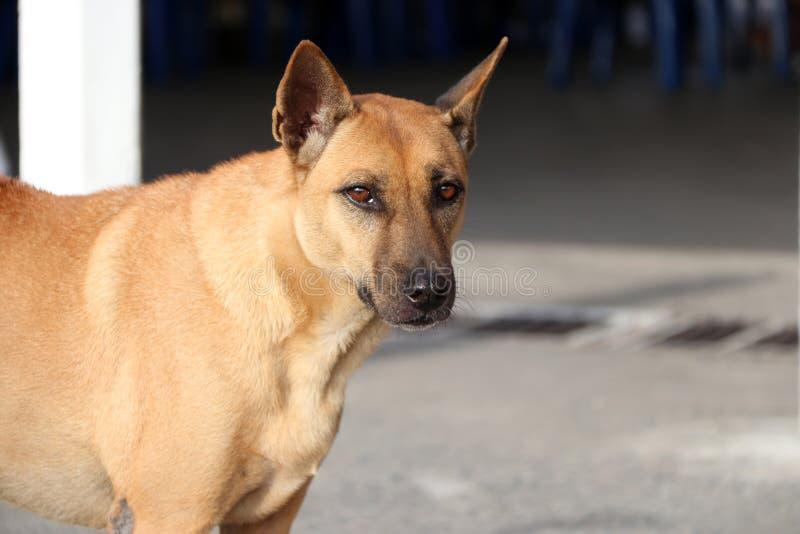 Moitié de chien brun se tenant sur le soleil image libre de droits