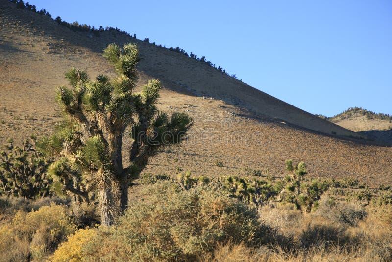 Mojaveöken fotografering för bildbyråer